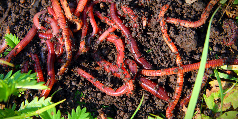 компостирование с червями