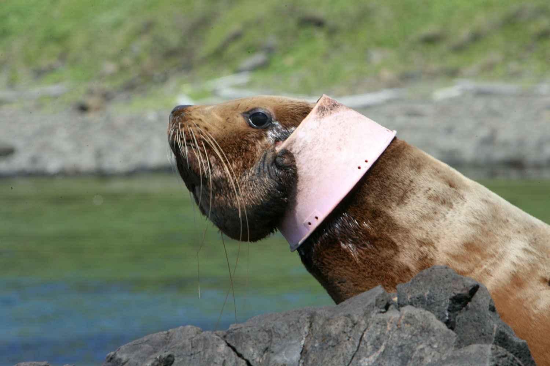 вляяние загрязнений океана на фауну