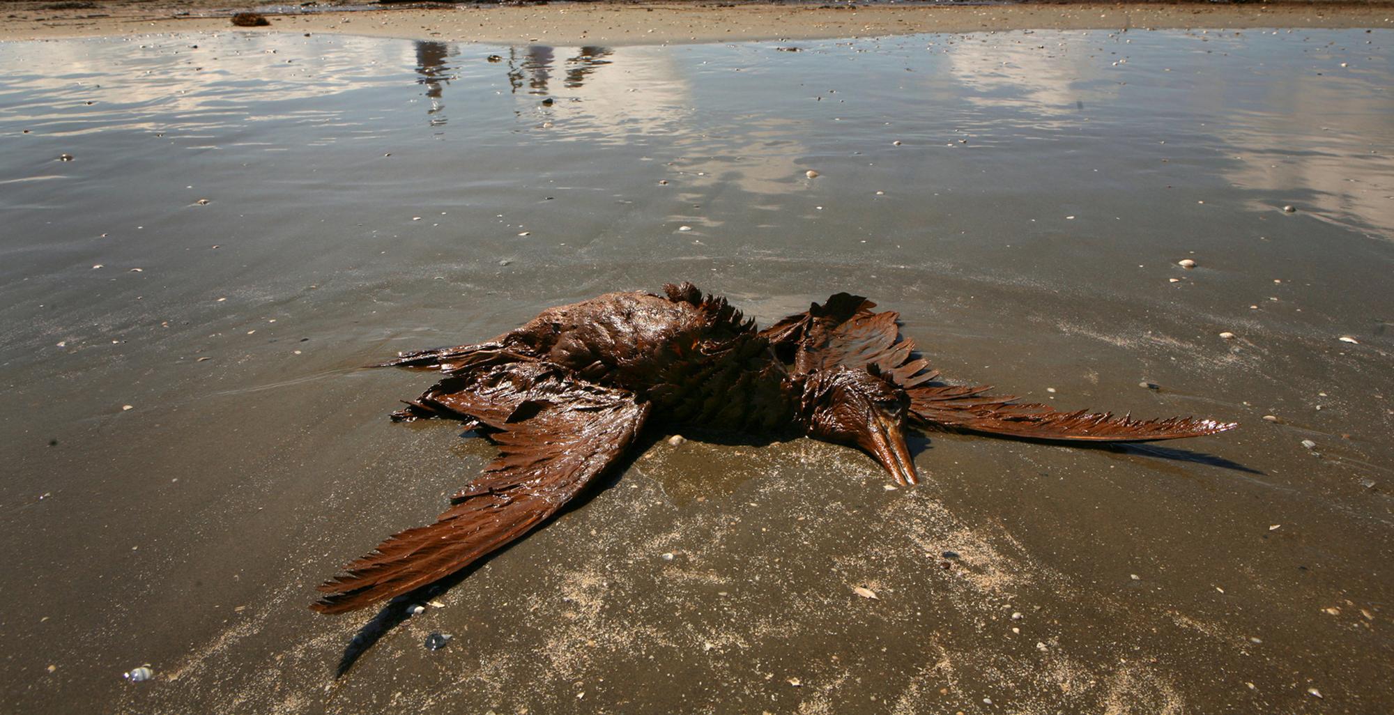 черное море - фауна