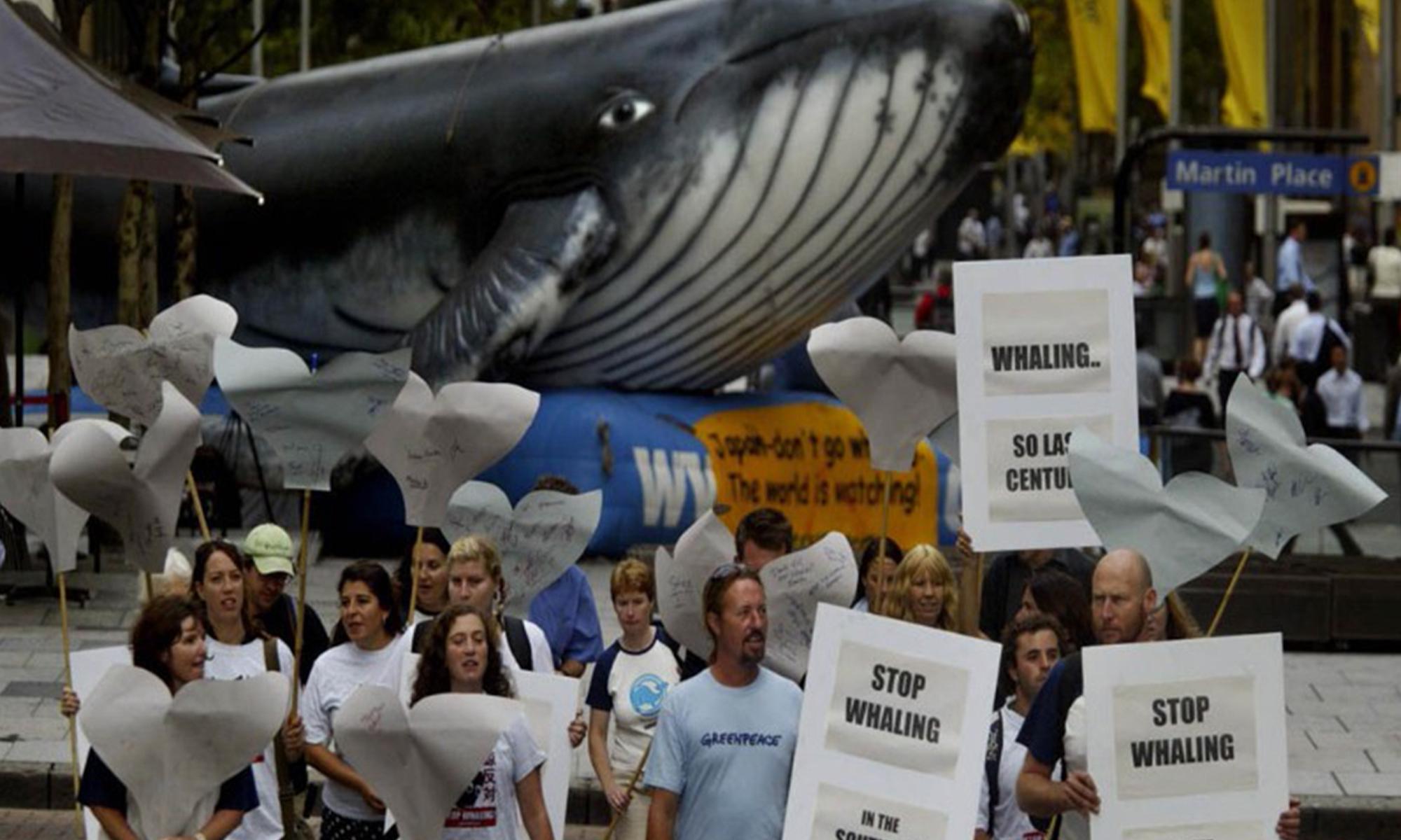 движение против охоты на китов