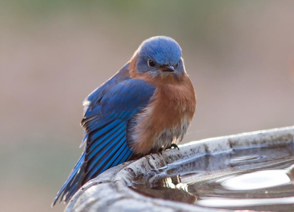 влияние шума на птиц