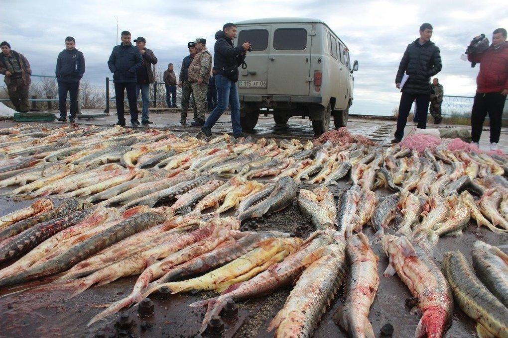 Вылов рыбы из Каспийского моря