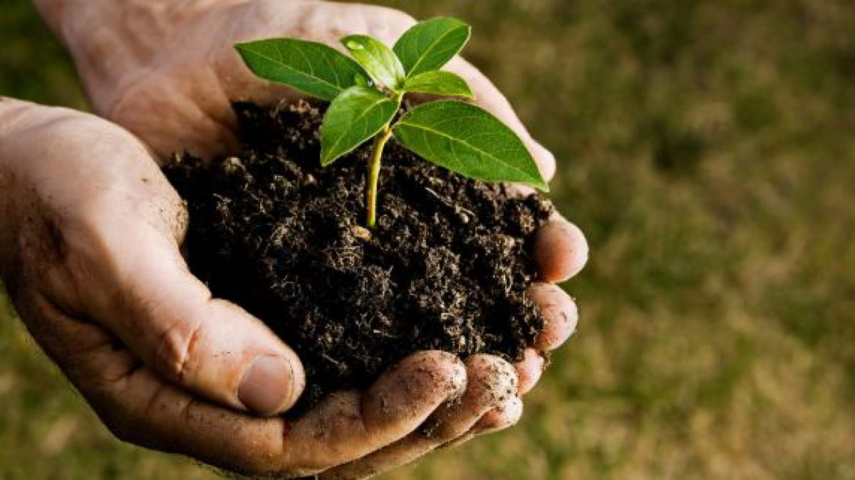 биогумус удобрение для растений