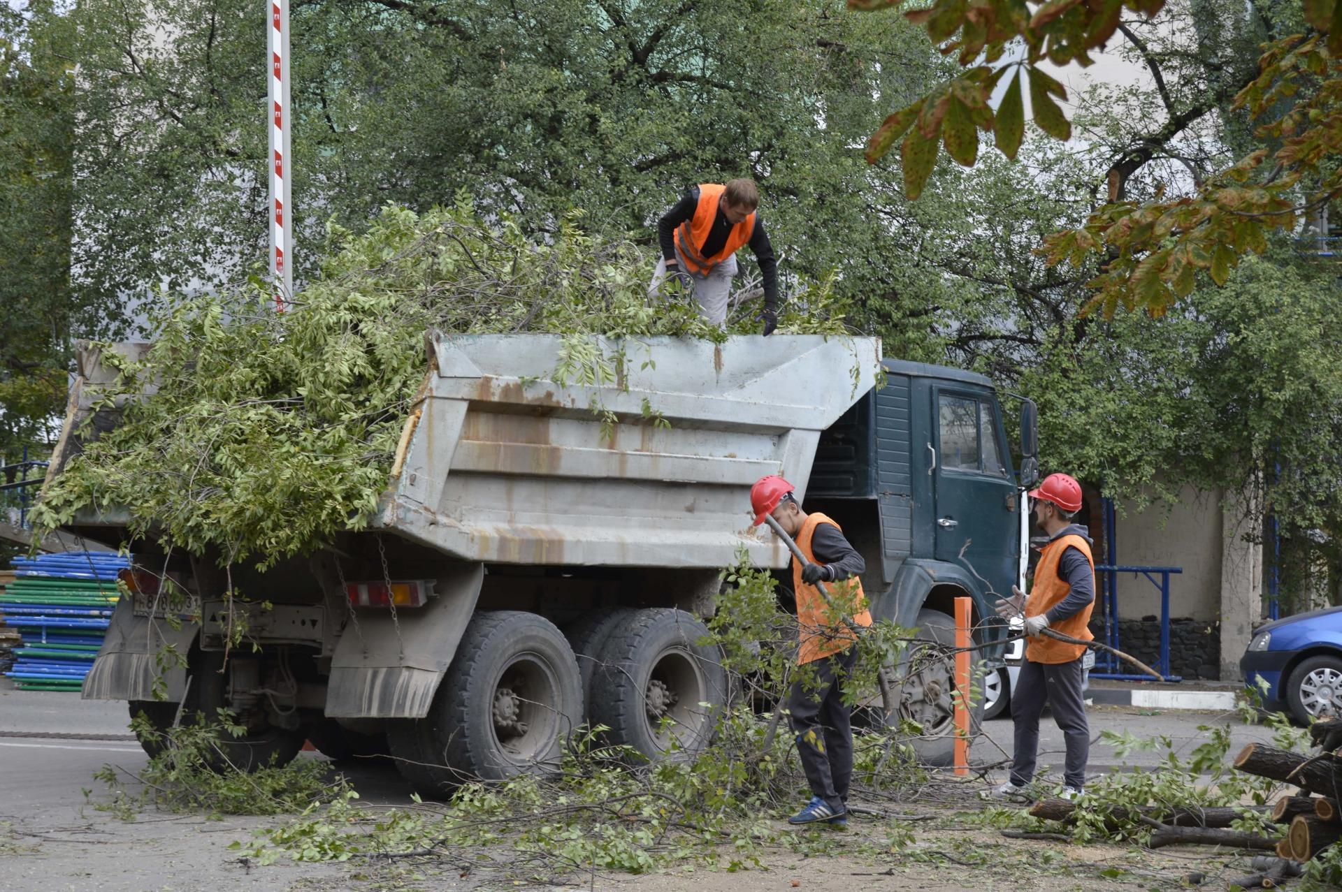 Утилизация деревьев и порубочных остатков