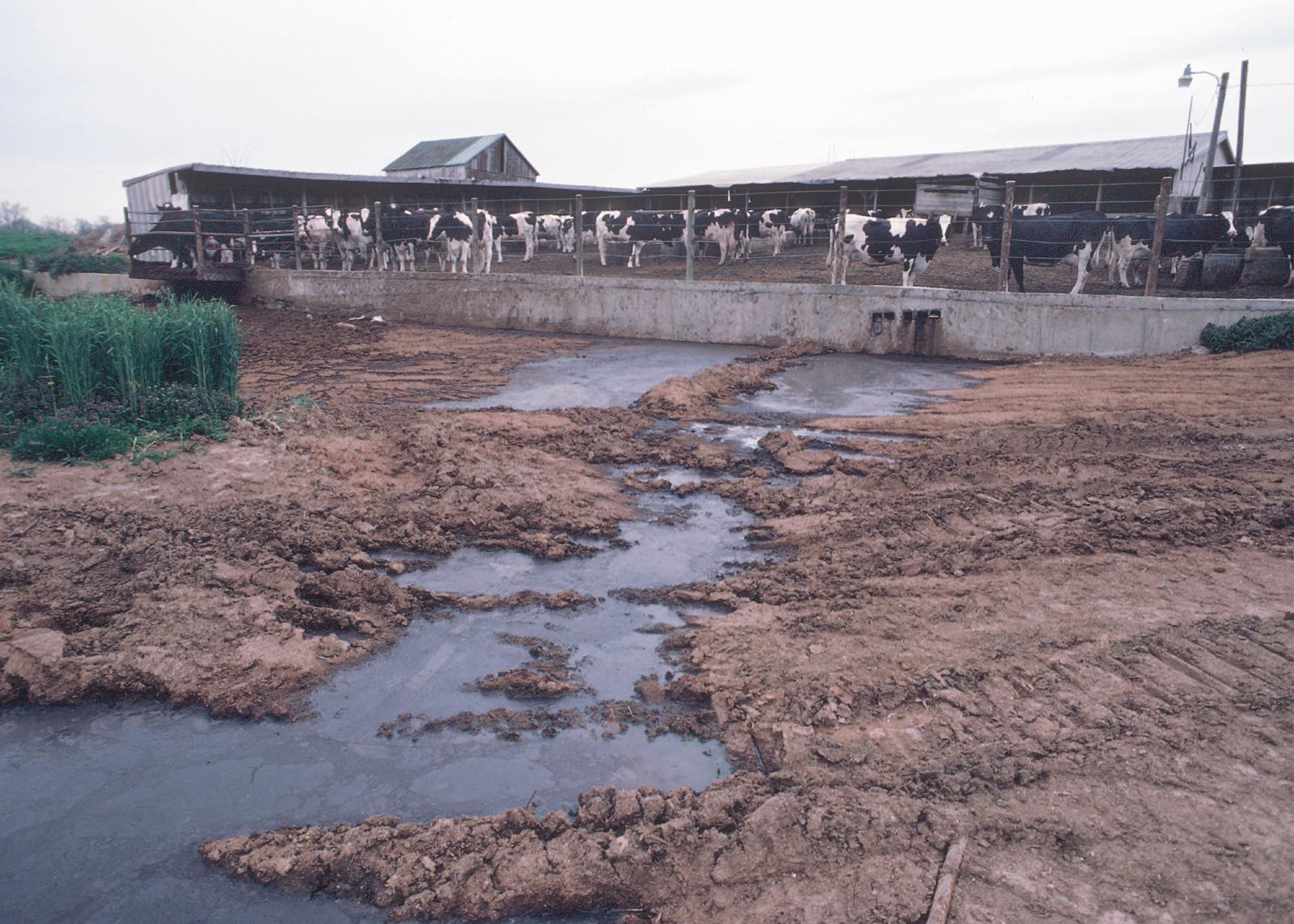 Загрязнение поверхностных вод