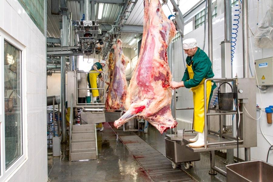 Переработка свиней на предприятии