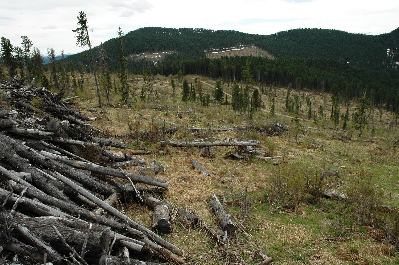 Одна из проблем ДВ - вырубка леса