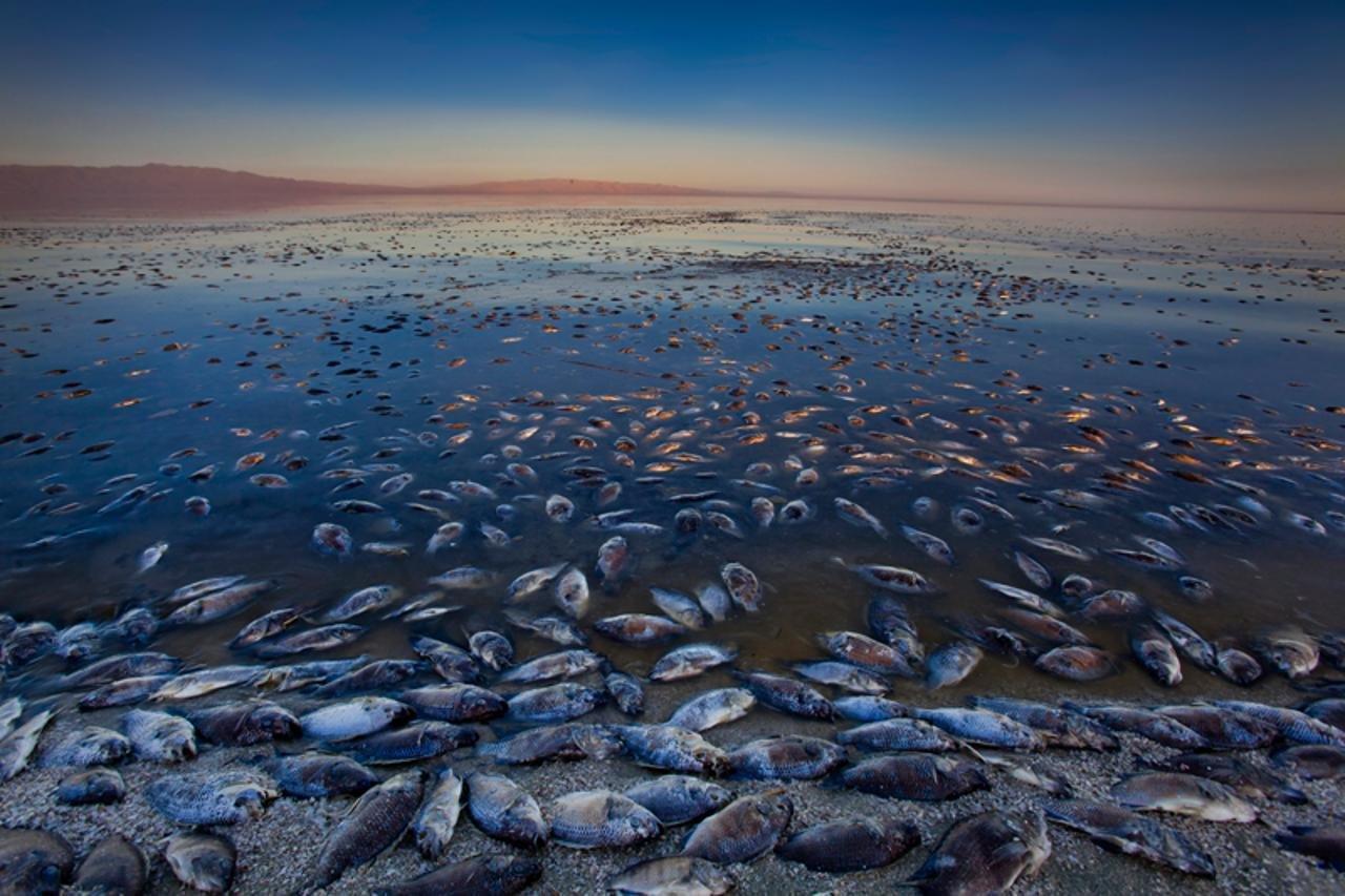 Экологические проблемы Аральского моря