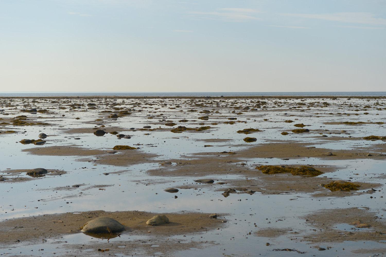 Экологические проблемы Белого моря