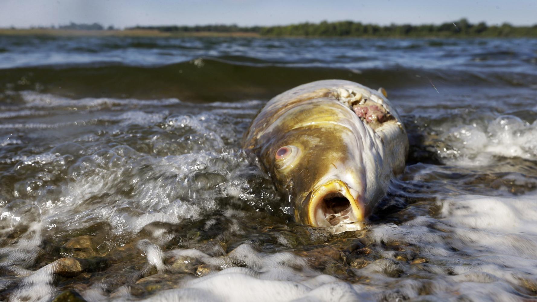 вред загрязнения воды