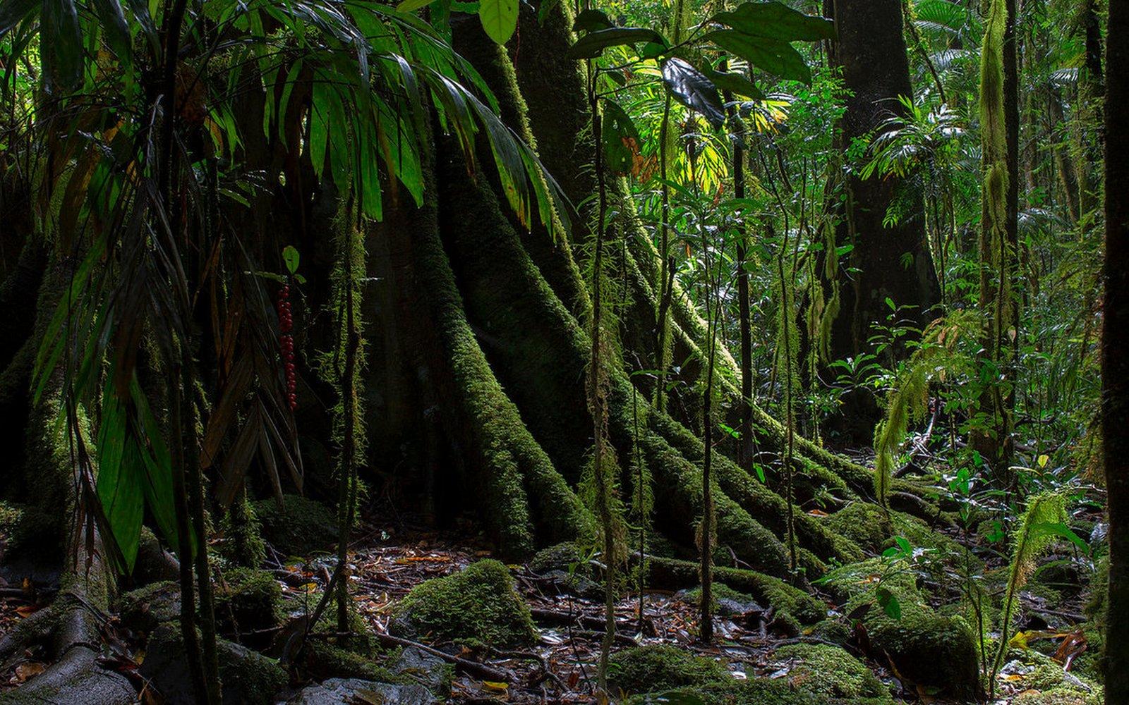 экваториальные-леса-африки
