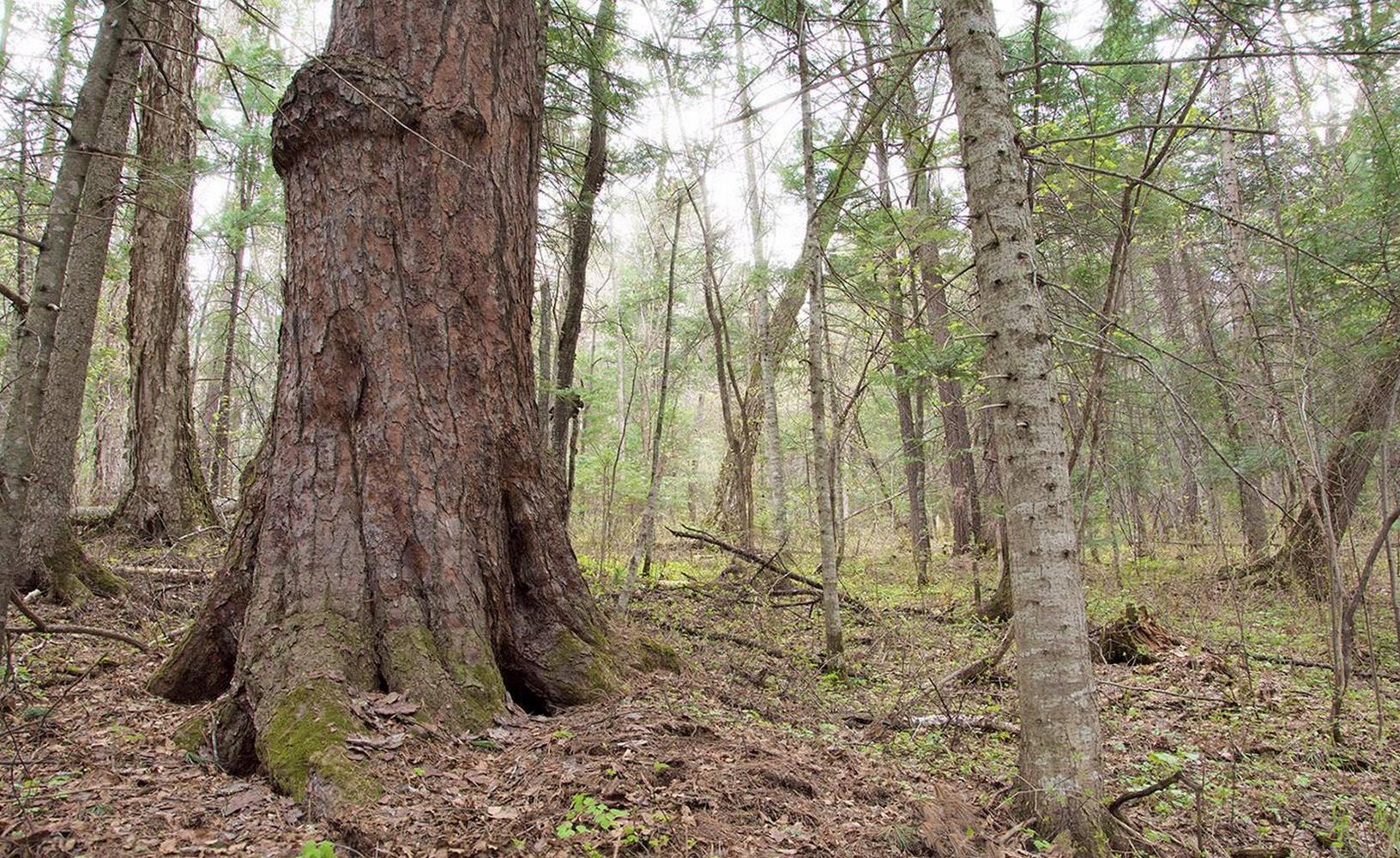 лес в тайге