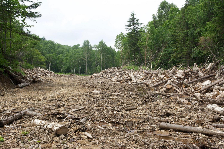 тайга вырубка леса