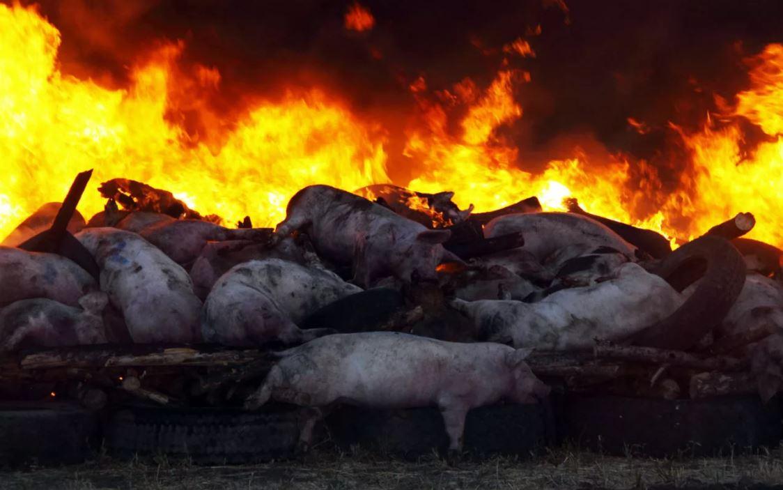 утилизация трупов животных