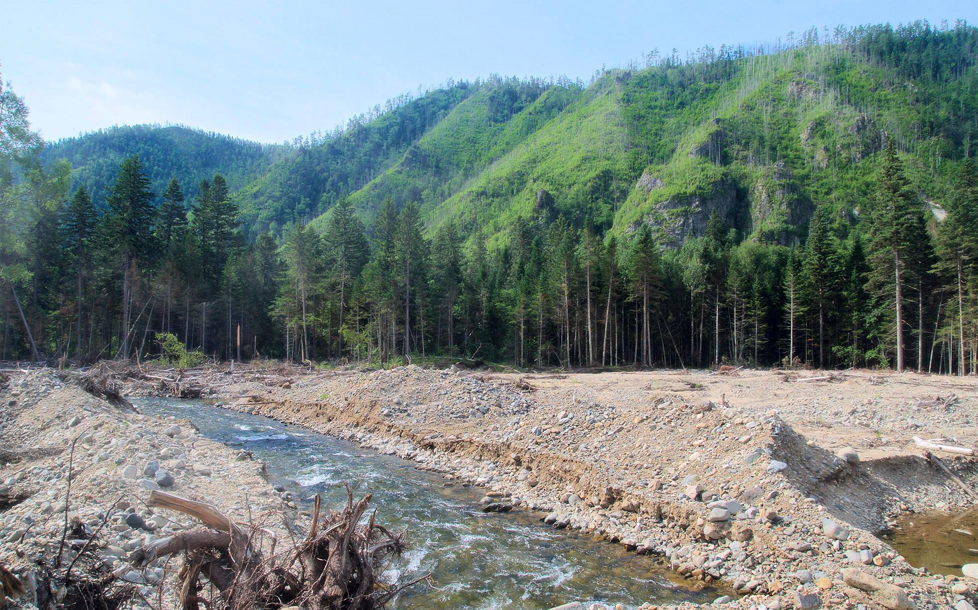 водный источник в тайге