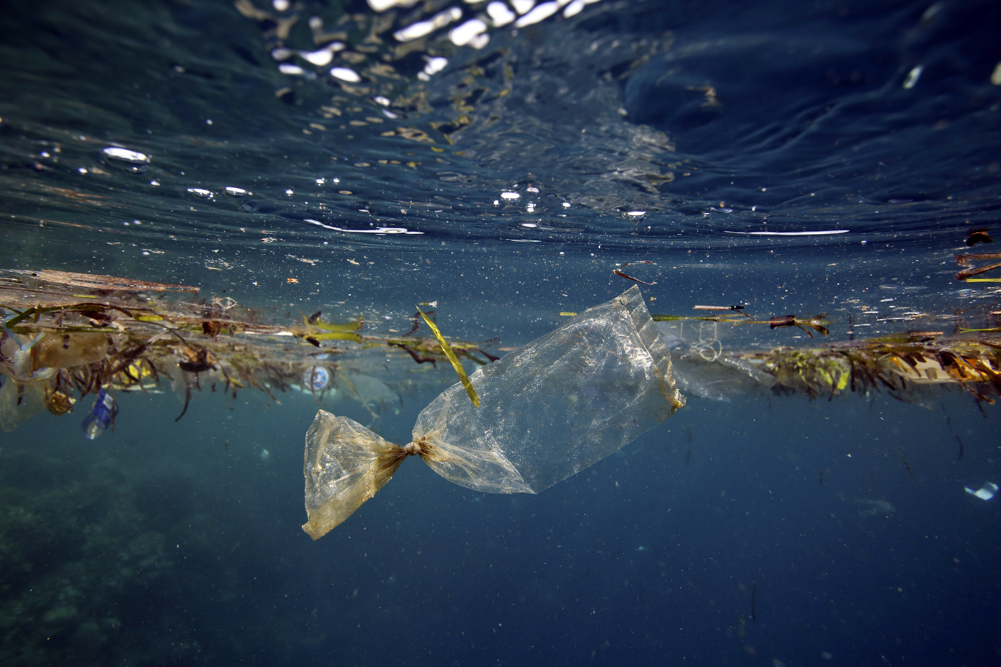 Влияние загрязнения водоемов на численность животных и растений