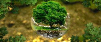 Консументы в экологии